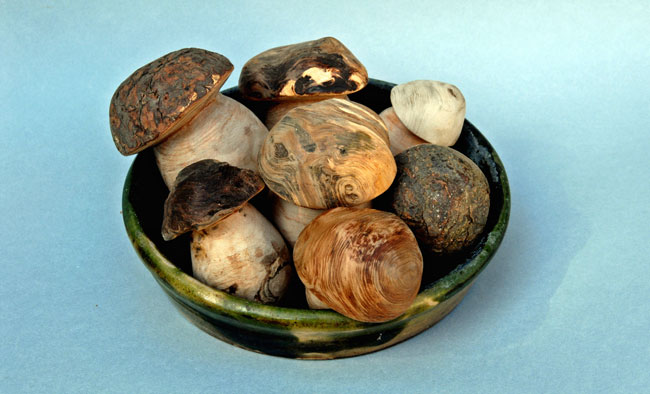 fungo di borgotaro, funghi borgotaro, borgotaro funghi, funghi porcini, borgotaro, il fungo di borgotaro