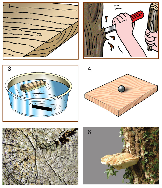 meccanica del legno