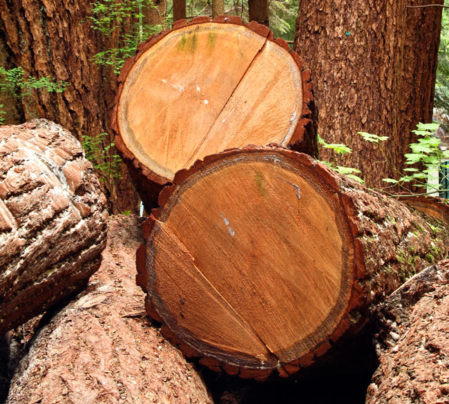 Tipi di legno naturale