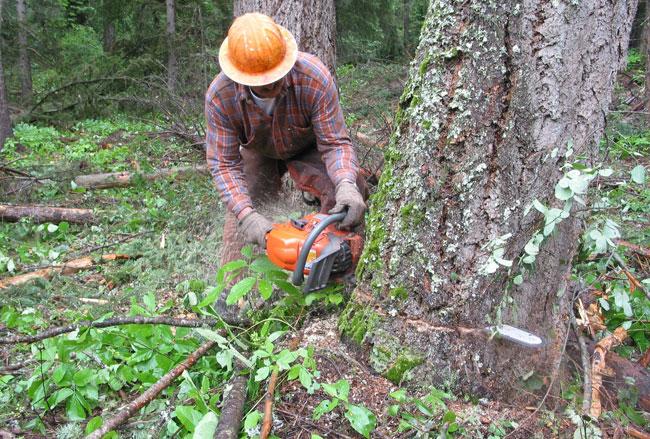 Dall'albero alle tavole di legno