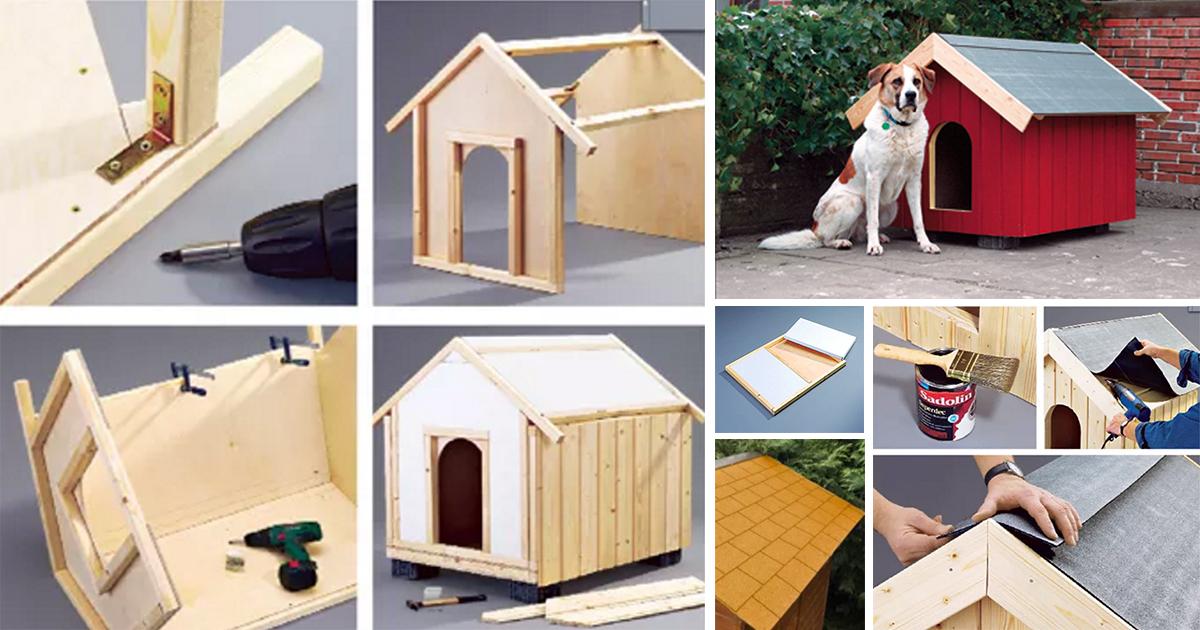 Costruire Una Cuccia Per Cani Termoisolata Con Polistirolo
