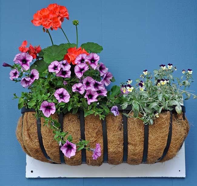 fioriera olandese