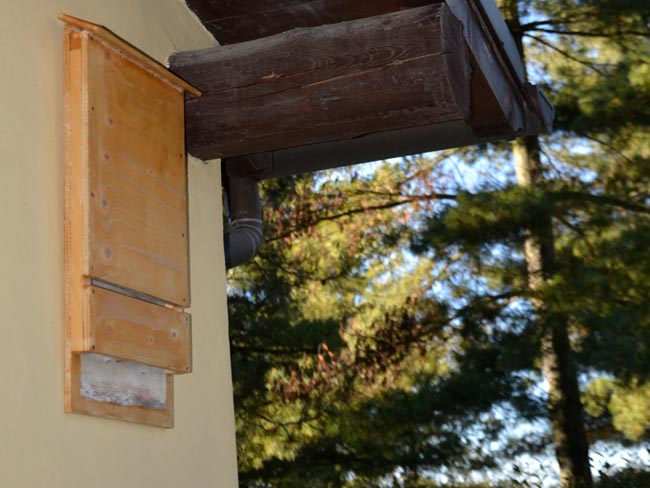 Bat box fai da te per i pipistrelli antizanzara naturale for Box per cavalli fai da te