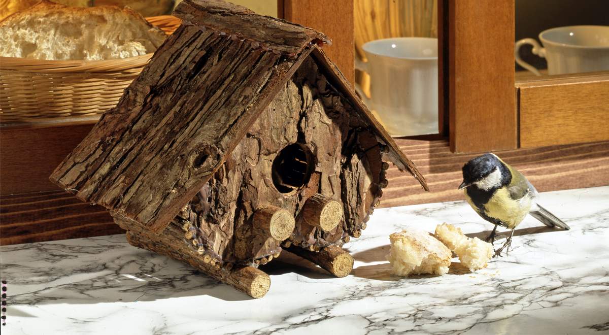 Casetta per uccelli di corteccia bricoportale fai da te for Casetta giardino fai da te
