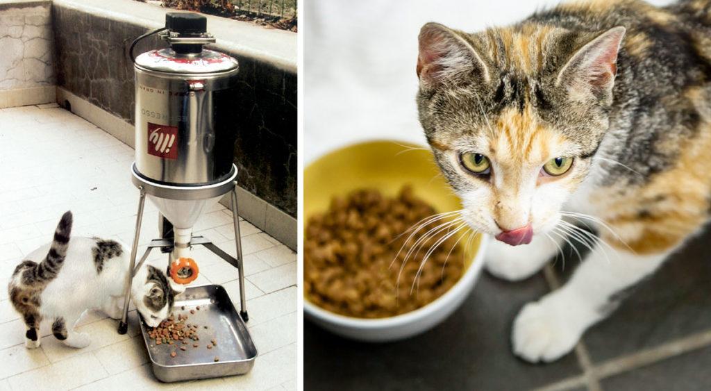 Mobili Per Gatti Fai Da Te : Distributore cibo gatti fai da te programmabile progetto