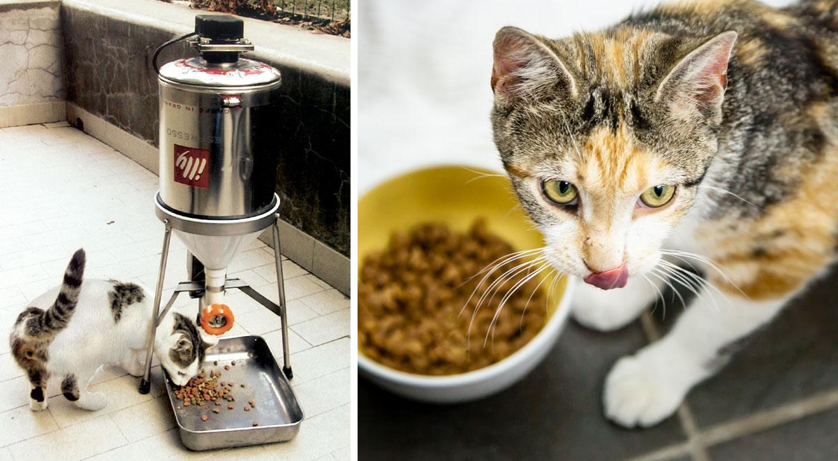 distributore cibo gatti