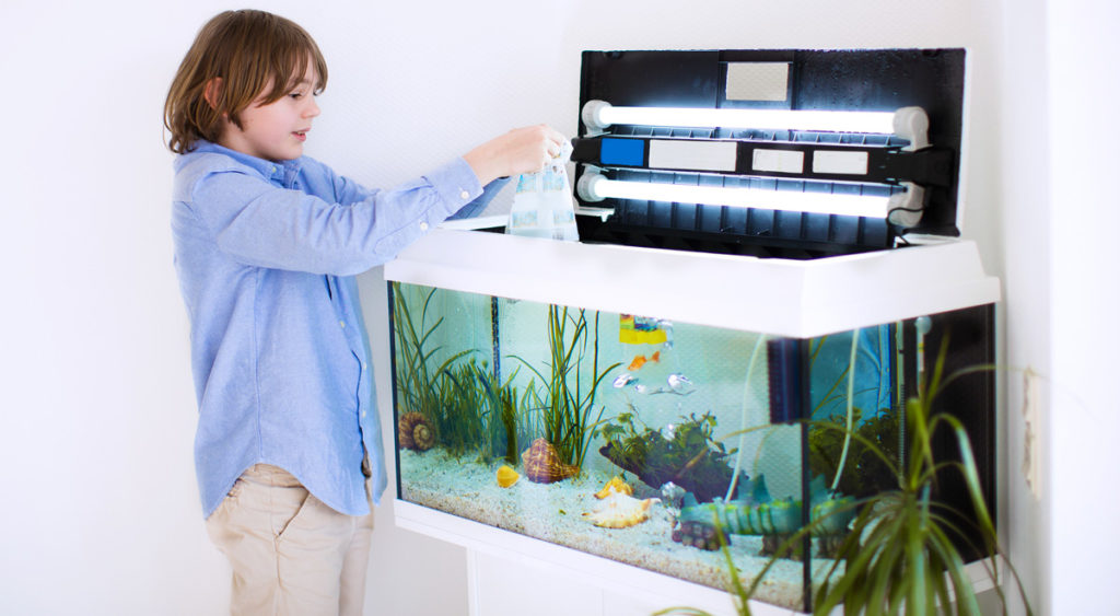 acquario fai da te progetto gestione pulizia pesci e