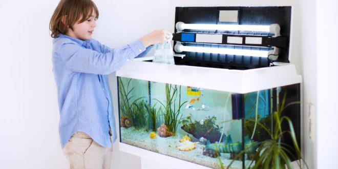 Acquario fai da te progetto gestione pulizia pesci e for Pulizia fossa biologica fai da te