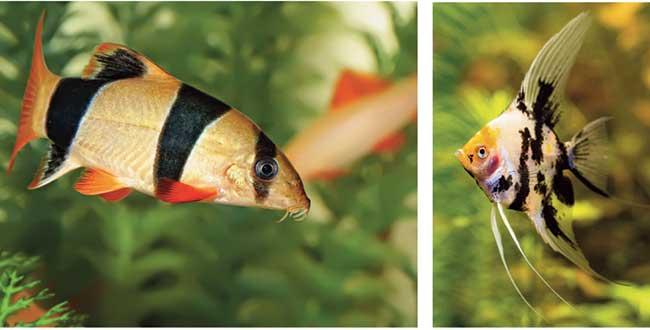 pesci da fondo per acquario