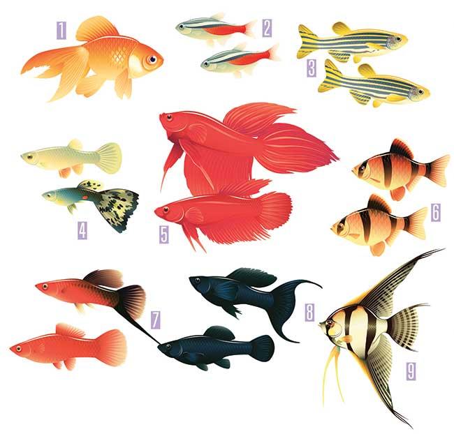 Acquario fai da te progetto gestione pulizia pesci e for Acquario per pesci