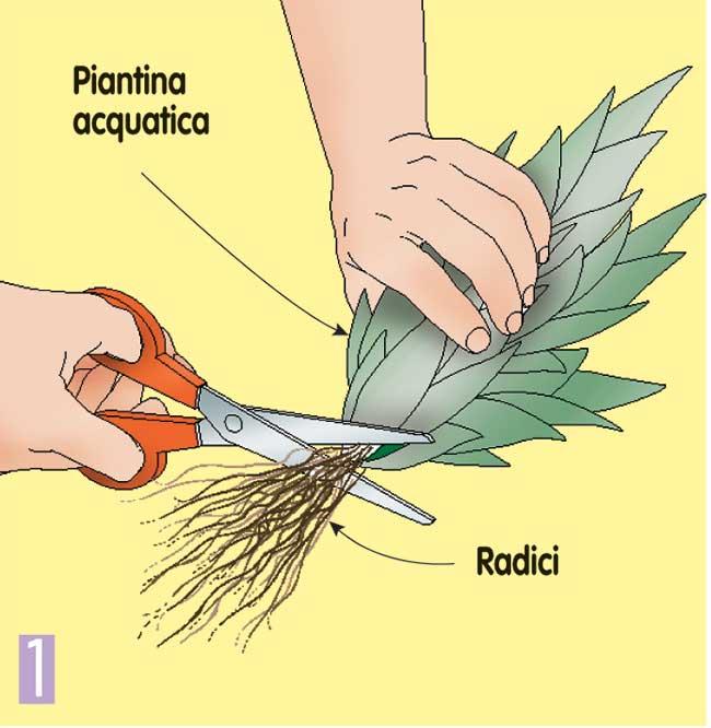come gestire le piante acquatiche