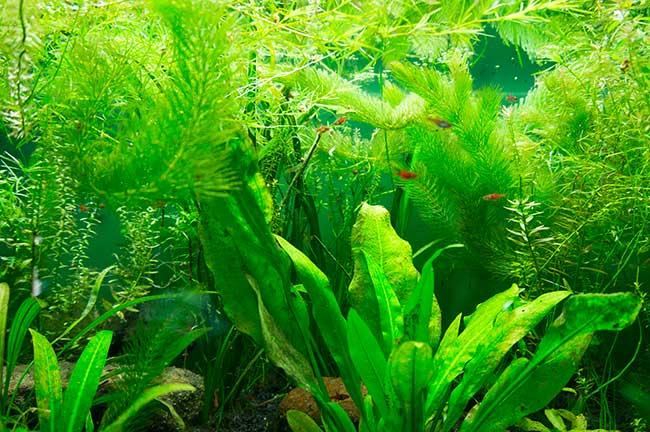 piante che vivono in acqua