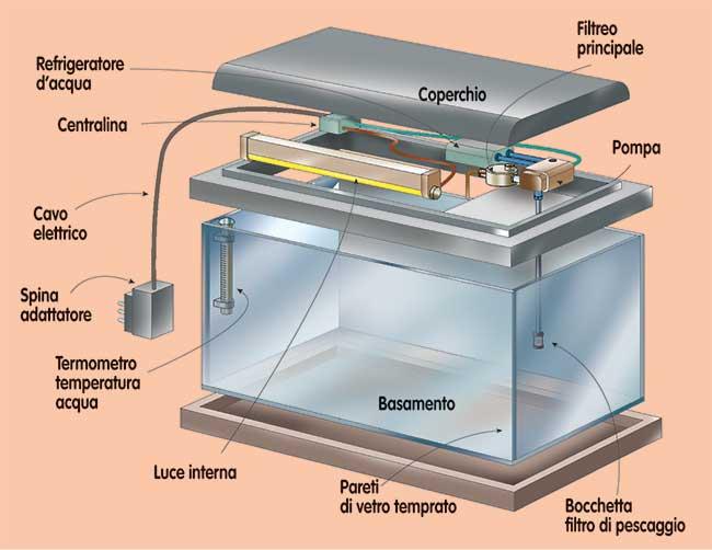 Acquario fai da te progetto gestione pulizia pesci e for Filtro vasca pesci