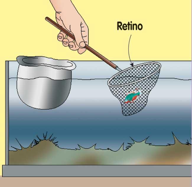rete per pesci acquario