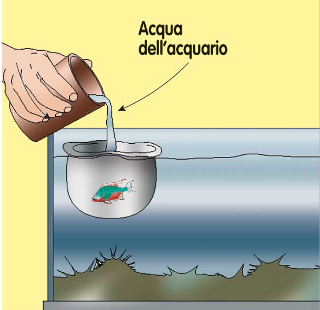 travaso pesci acquario