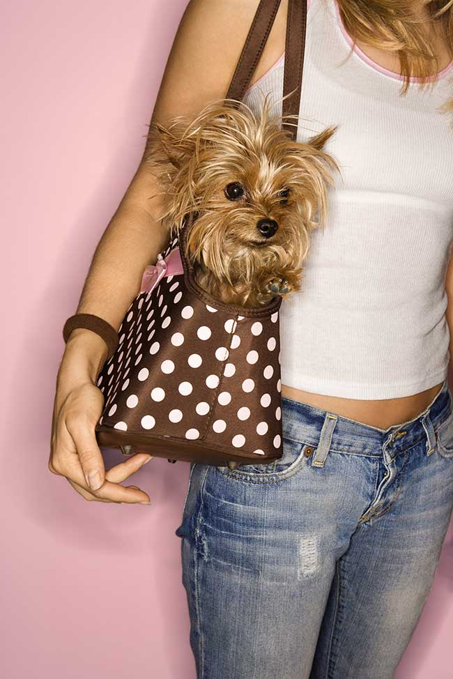 borsa per cani