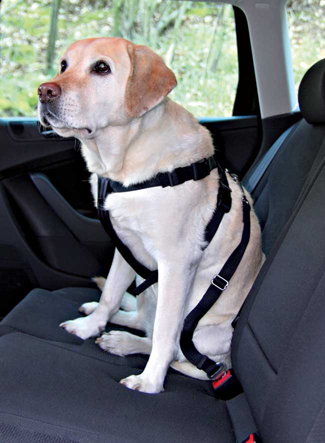 contura di sicurezza per cani
