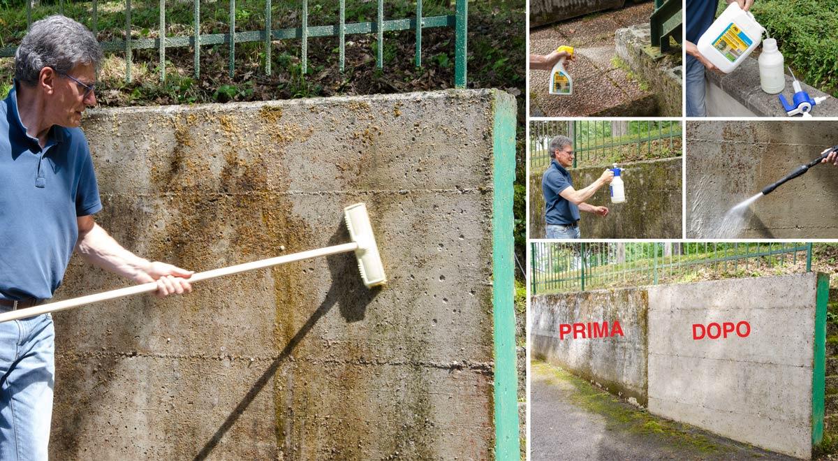 Muro Bagnato Cosa Fare come risanare muro umido da alghe, muffe, licheni e depositi