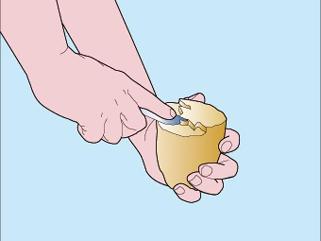 timbro-patata