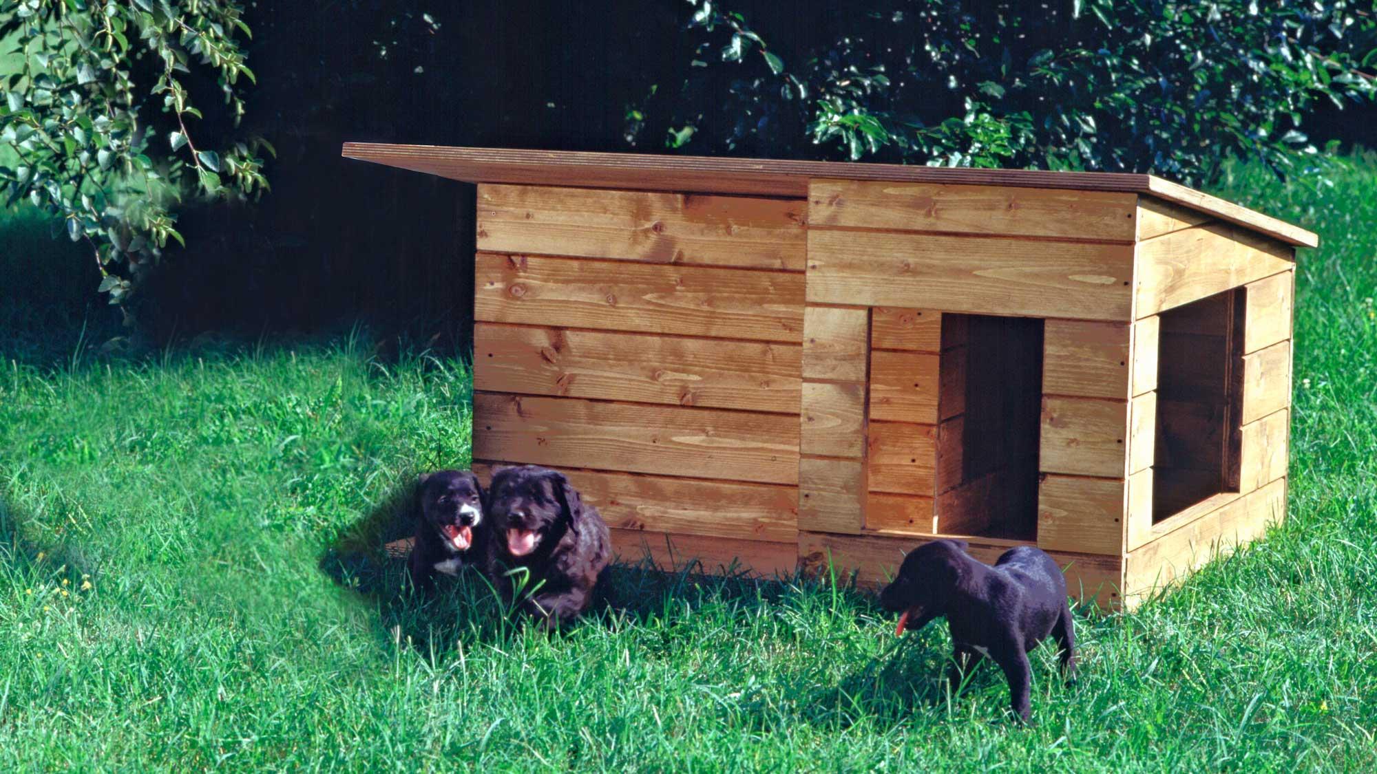 Cuccia in legno fai da te con isolamento e ventilazione | Come realizzarla