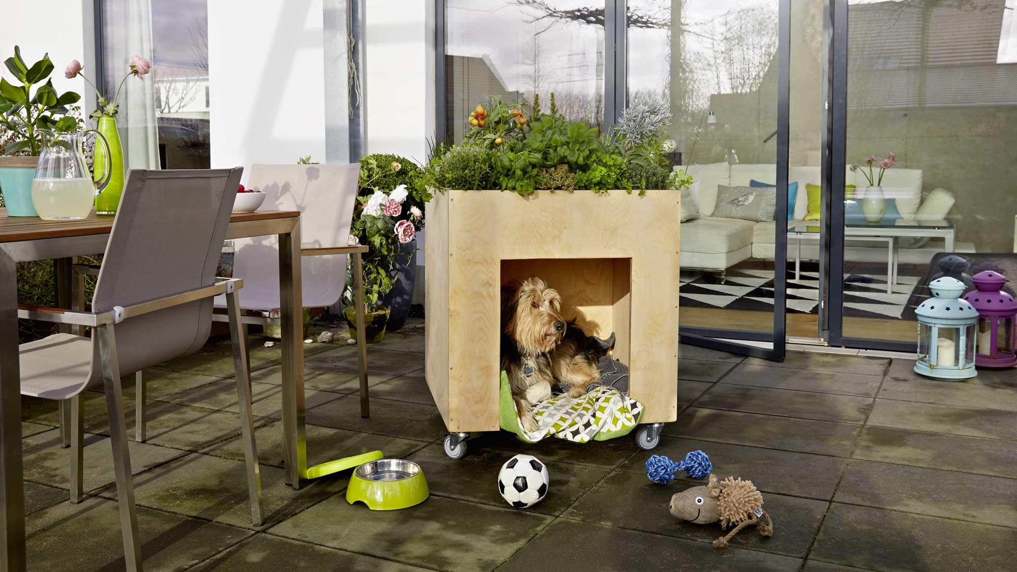 Cuccia per cani fai da te con giardino sul tetto | Costruzione passo-passo