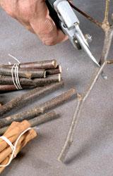 bastoncini di cannella per il Pout Pourri