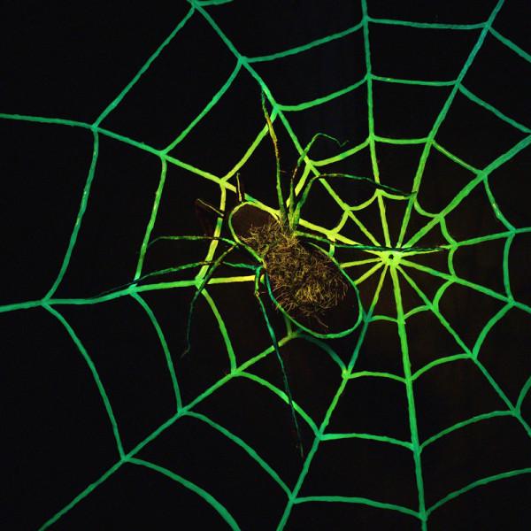 Ragnatela fluorescente per ragno Halloween