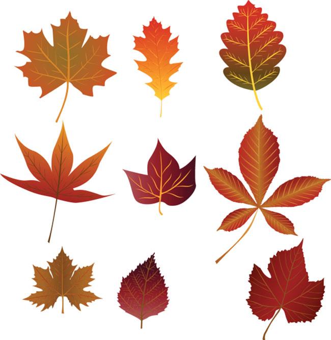 foglie decorative 8