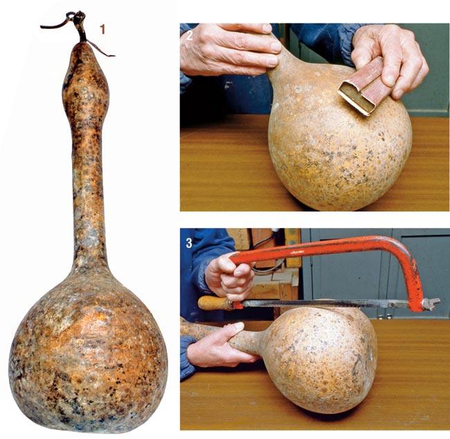 zucca bottiglia Lagenaria Siceraria